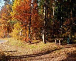 HerbstSilke1